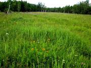 Продам участок земли в Ярославской области в Переславле.